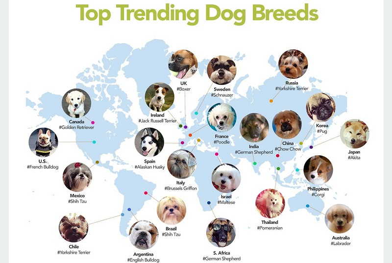 the-internets-favorite-dog-breeds-by-country